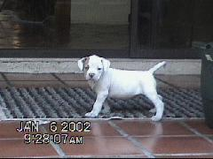 puppylui0001.jpg