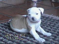 puppytestabianca0001.jpg